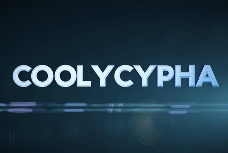 Coolytop présente les Coolycypha