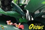 TheLove vous présente son EP Grows