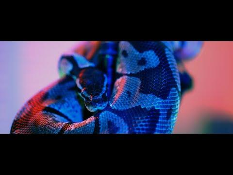 Vlg Rocki ft. Dj Tokinou - Bad